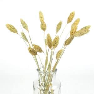 dried canary grass