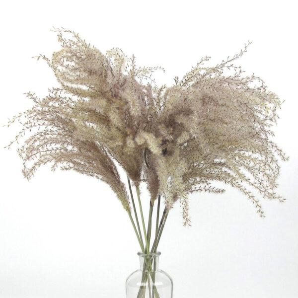 dried miscanthus grass