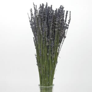 dried lavender bulk