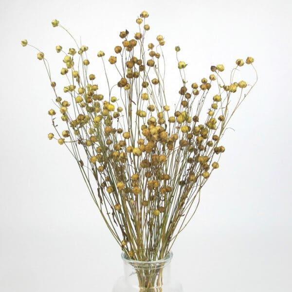 dried linum