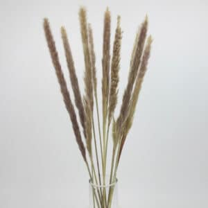 dried mini pampas grass