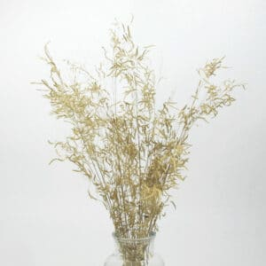 dried munni grass