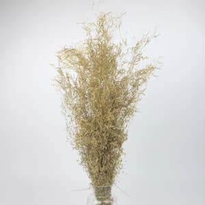 dried munni grass bulk