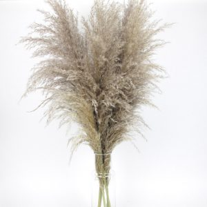 large fluffy dried pampas grass