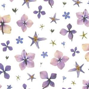 mr studio london flower 7 card zoom