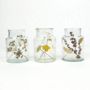 bell jar trio mini dried lona