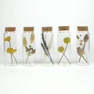 joni small dried flowers colour